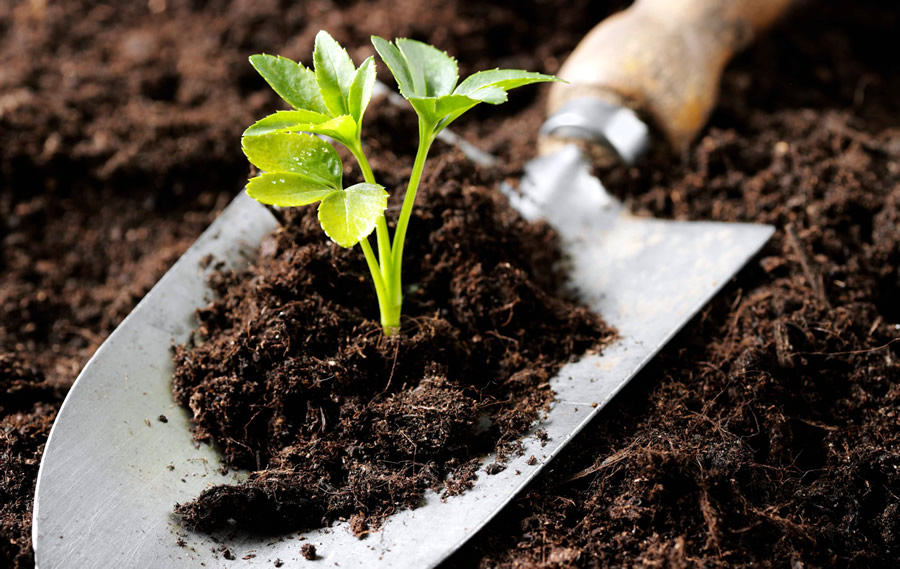 Market study on possibilities for utilization of organic fertilizers